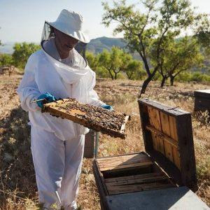 prudcteurs de miel sud espagne